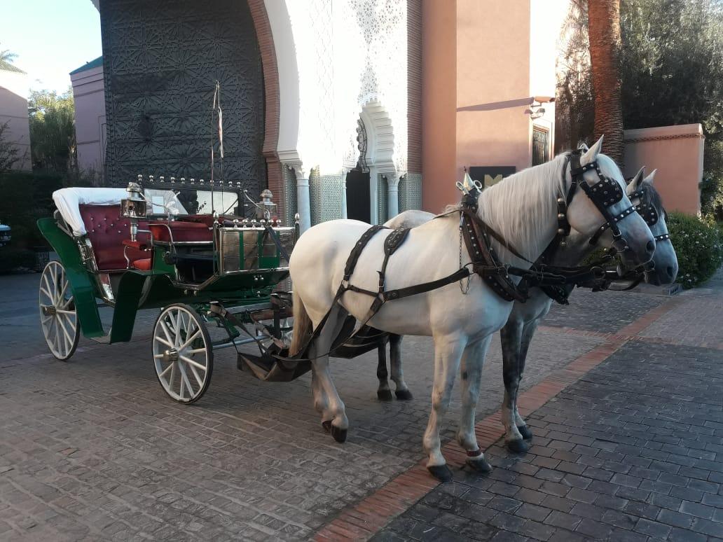 Equitation 3